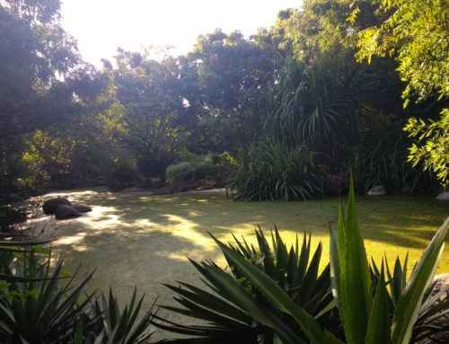 Lemurian Nature Walk in Chennai
