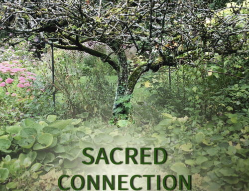 Sacred Connection with Trees
